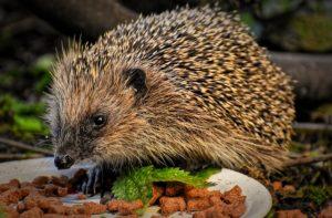 Dětské básničky: Proč tak dupeš, ježku milý? (Z rubrik Říkanky pro nejmenší, Básničky o zvířátkách)