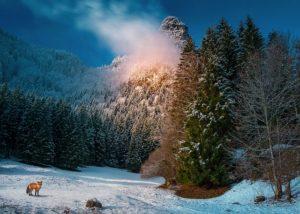 Dětské básničky: Zvířátka na Štědrý večer (z rubrik Vánoční básničky, Básničky o zimě, Básničky o zvířátkách)
