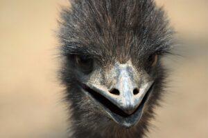 Dětské básničky: Ema má emua (z rubrik Básničky o zvířátkách, Vtipné básničky)
