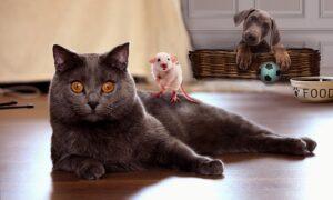 Dětské básničky: Hladí kočka myšku (z rubrik Říkanky pro nejmenší, Básničky o zvířátkách)